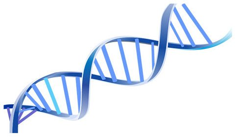 blue DNA caten on a white background